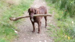 Bertie stick October surrender