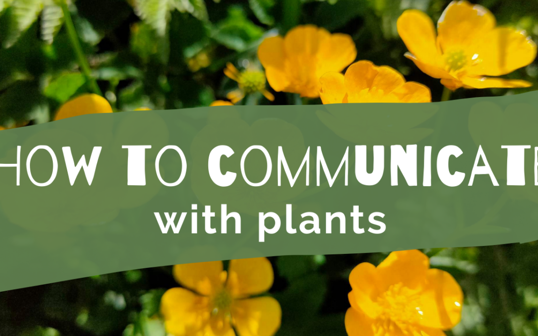 How to Communicate with Plants
