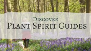 plant spirit guides course
