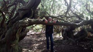Plant Spirit Reiki yew tree