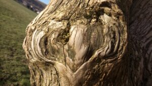 plant spirit reiki heart wood