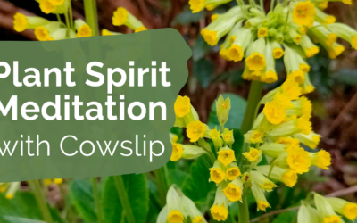 Meditation with Cowslip